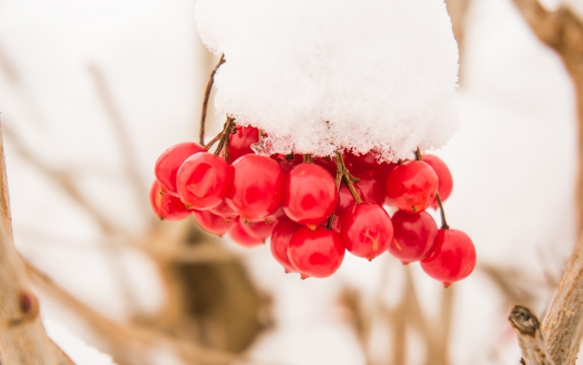 Talvi Tarjous